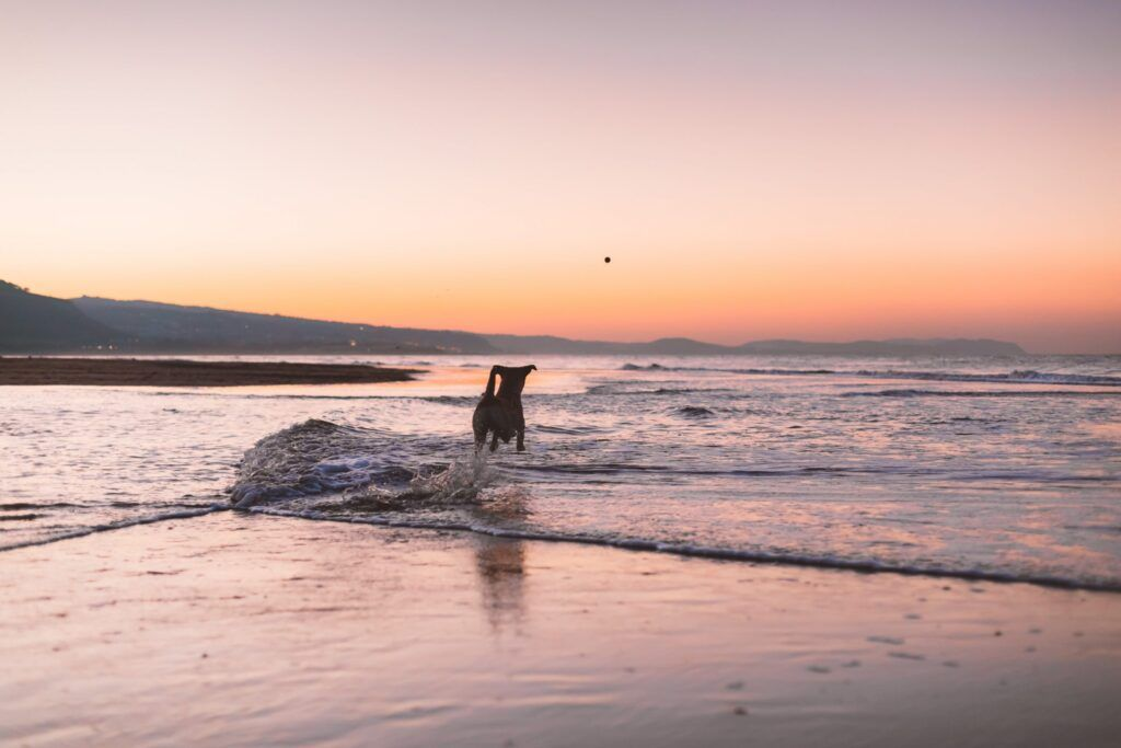 Dog Walk in Oban on Ganavan Sands Beach