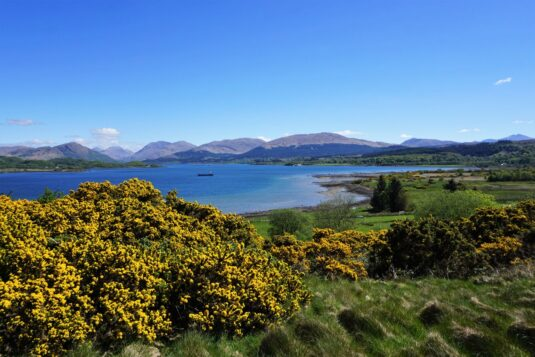 Oban, Argyll & Bute, Scotland - May 7, 2017: Looking east over Loch Creran toward the mountain of the western Highlands on a clear sunny May morning. The yellow of the gorse bush in the foreground provide a contrast to the blues of the loch and the sky
