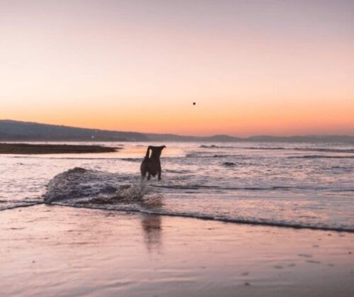 Dog on Oban Seafront Beach Near Luxury Oban Hotel